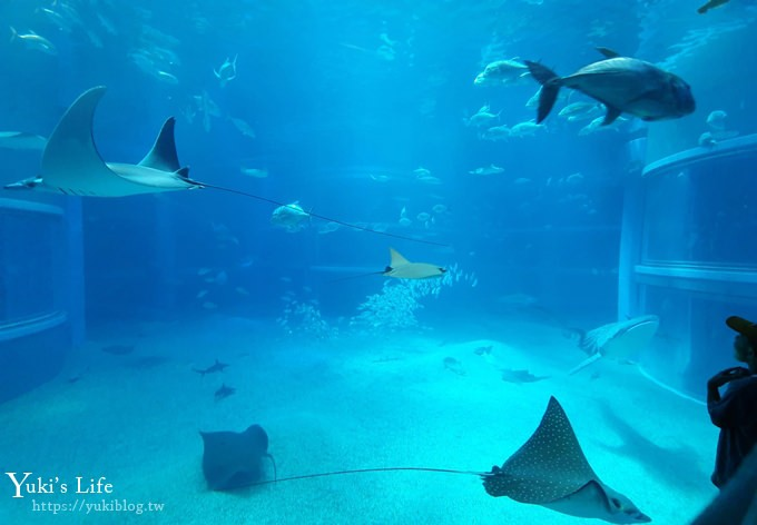 大阪景點【大阪海遊館】親子同遊好去處×可以摸鯊魚和魟魚哦! - yukiblog.tw