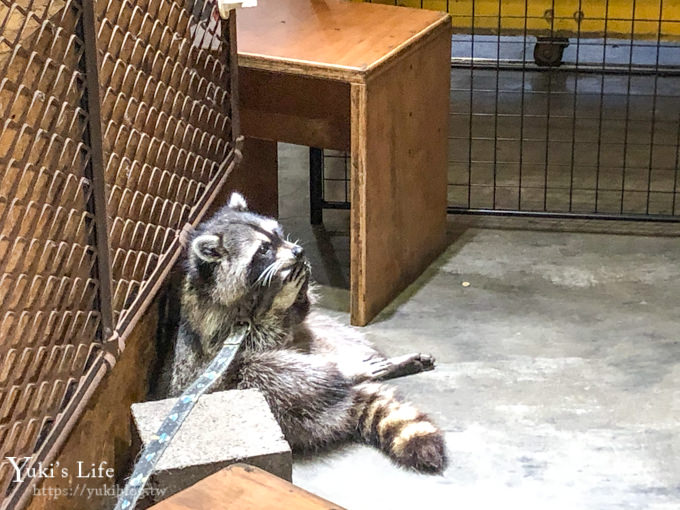 台北美食 【穿越九千公里交给你】 浣熊咖啡厅就在这! (捷运中山国中站) - yukiblog.tw