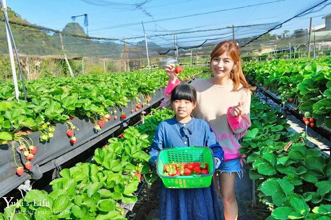 苗栗大湖採草莓一日遊《六合高架牛奶草莓農場》超大草莓又紅又香!不怕鞋子髒掉喲~