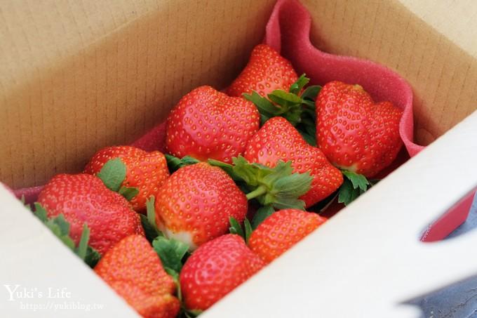 苗栗大湖採草莓一日遊【六合高架牛奶草莓農場】超大草莓又紅又香!不怕鞋子髒掉喲~ - yukiblog.tw