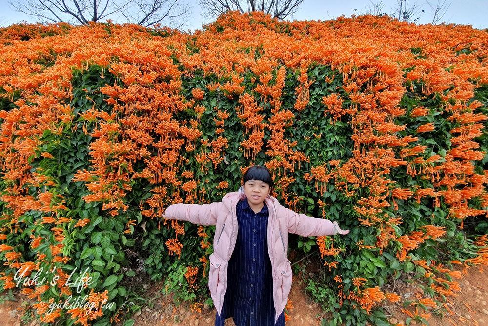 苗栗免費景點【銅鑼炮仗花海公園】粉橘雙色花牆接力到三月! - yukiblog.tw