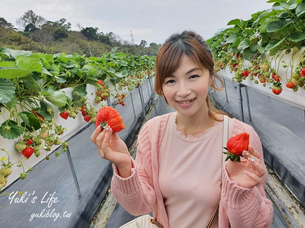 苗栗大湖採草莓推薦【莓果大高架草莓園】草莓比雞蛋還大~平日也能採 - yukiblog.tw