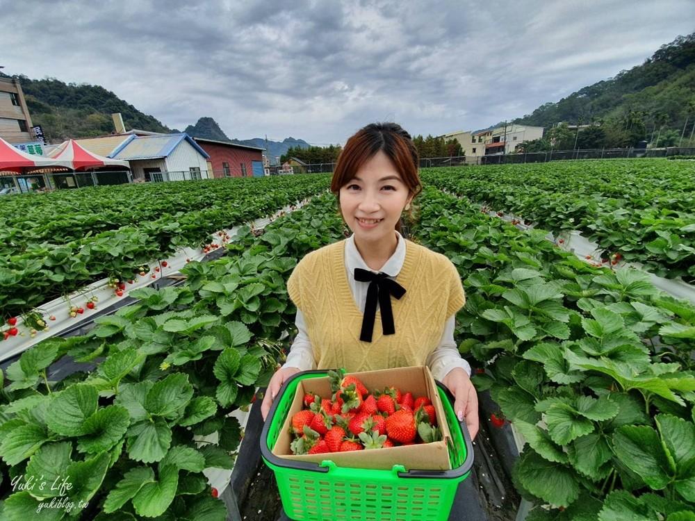 苗栗大湖採草莓推薦這4家!高架草莓,草莓果醬DIY~香甜草莓在這裡! - yukiblog.tw