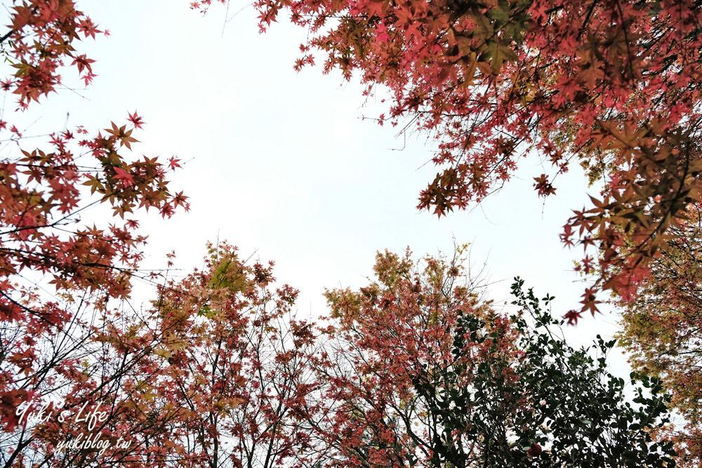 士林美食【台北奧萬大】陽明山賞楓、繡球花、森林親水避暑、小木屋簡餐下午茶 - yukiblog.tw
