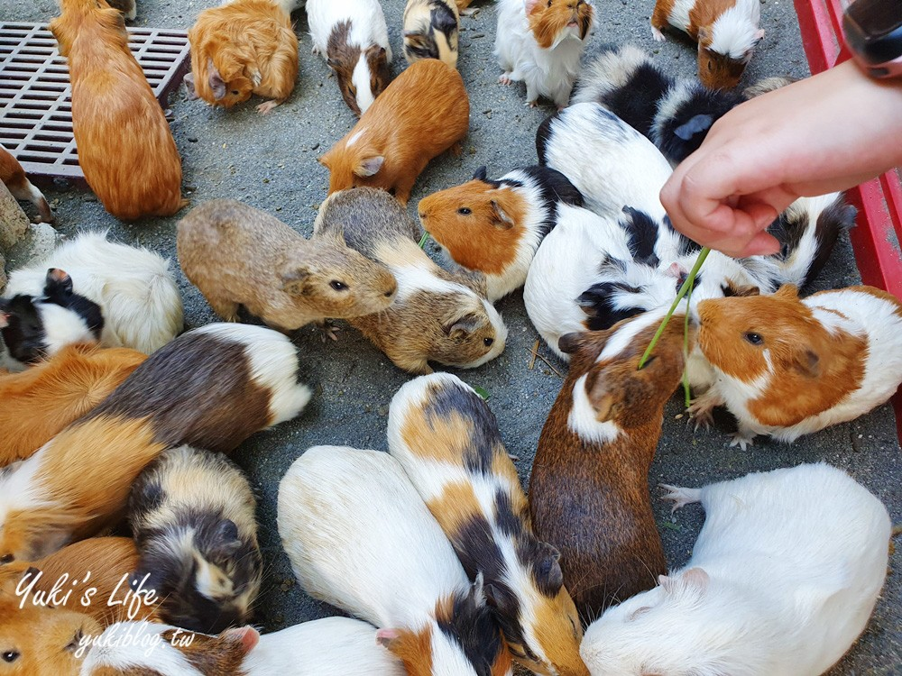 彰化景點【今夜星辰休閒農場】超多草泥馬、天竺鼠、小兔子~餵動物玩沙景觀餐廳好拍又好玩! - yukiblog.tw