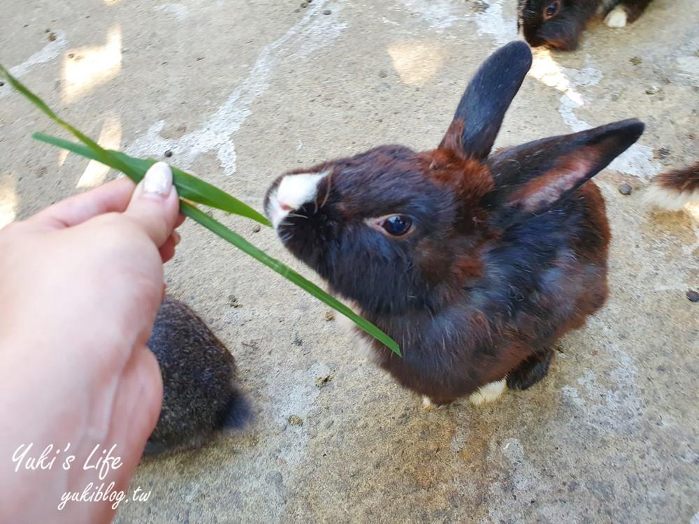 彰化景点【今夜星辰休闲农场】超多草泥马、天竺鼠、小兔子~喂动物玩沙景观餐厅好拍又好玩! - yukiblog.tw