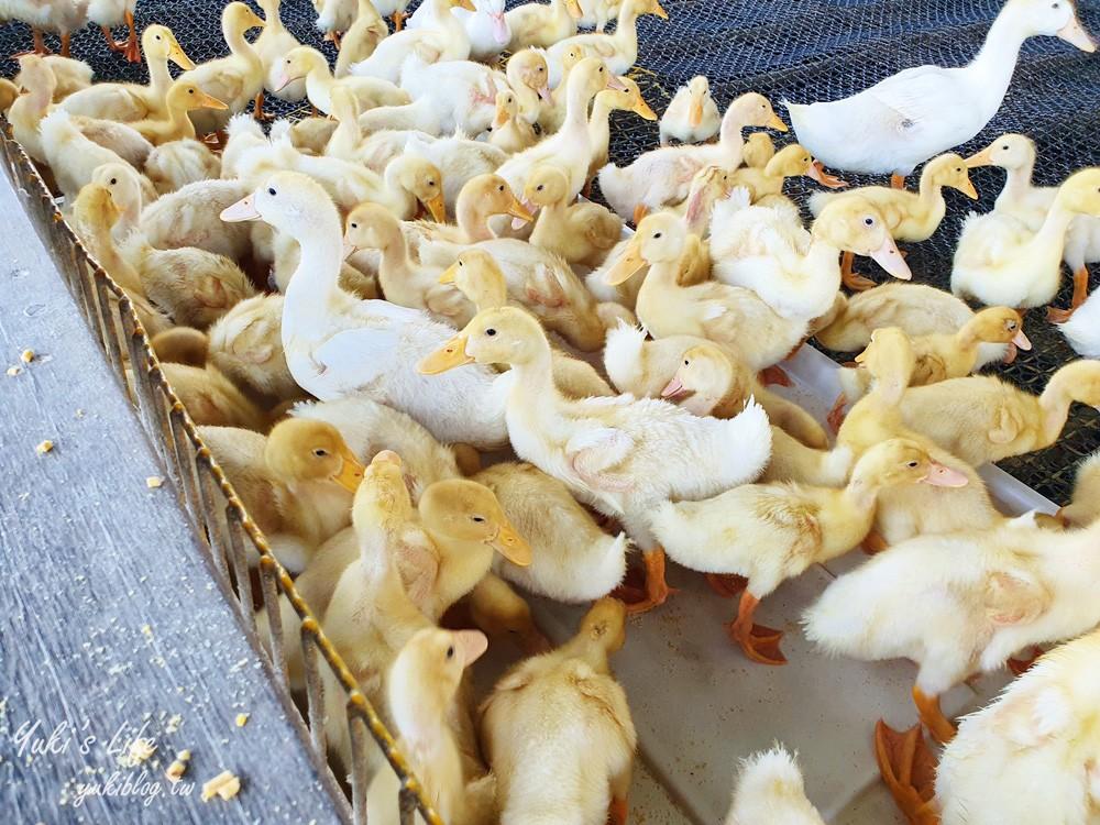 宜兰亲子景点【甲鸟园】五星级鸭寮玩水喂鸭鸭~鸭蛋蛋糕必吃~礁溪一日游推荐 - yukiblog.tw