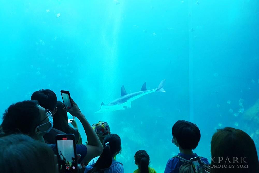 桃園親子景點『Xpark台灣八景島水族館』跟企鵝一起喝咖啡(門票、停車、一日遊行程) - yukiblog.tw
