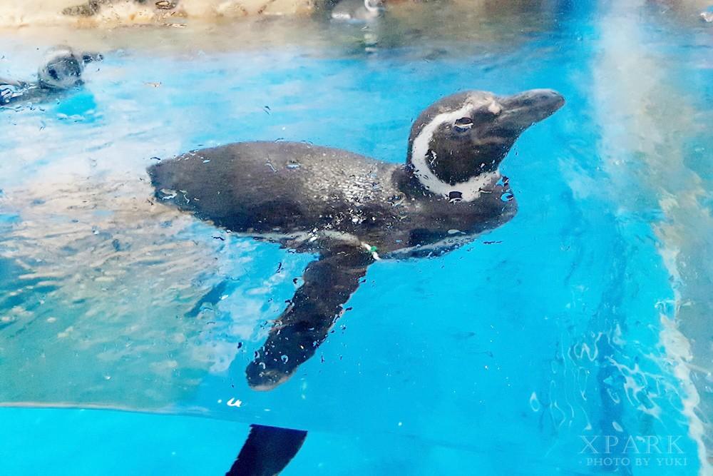 桃园亲子景点'Xpark台湾八景岛水族馆'跟企鹅一起喝咖啡(门票、停车、一日游行程) - yukiblog.tw