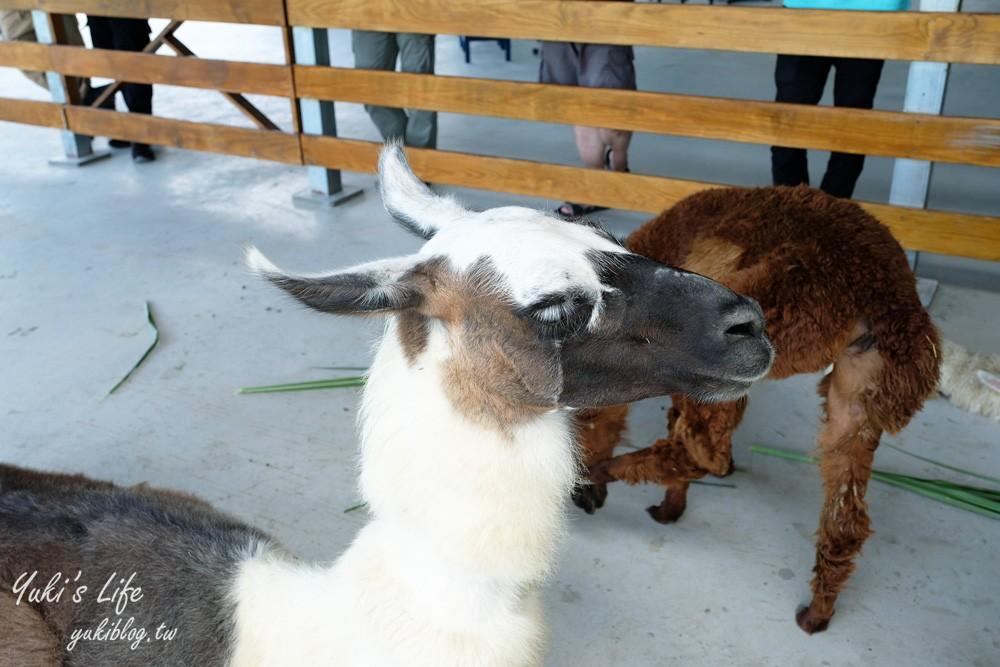 《心花鹿Fun》梅花湖新景點~天然萌草泥馬、梅花鹿、巴貝多綿羊療~讓你心花怒放 - yukiblog.tw