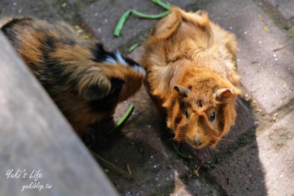 台南景點【大坑休閒農場】不只有動物趴趴造,還有隱藏版碳烤山土雞、繩索吊橋很刺激 - yukiblog.tw