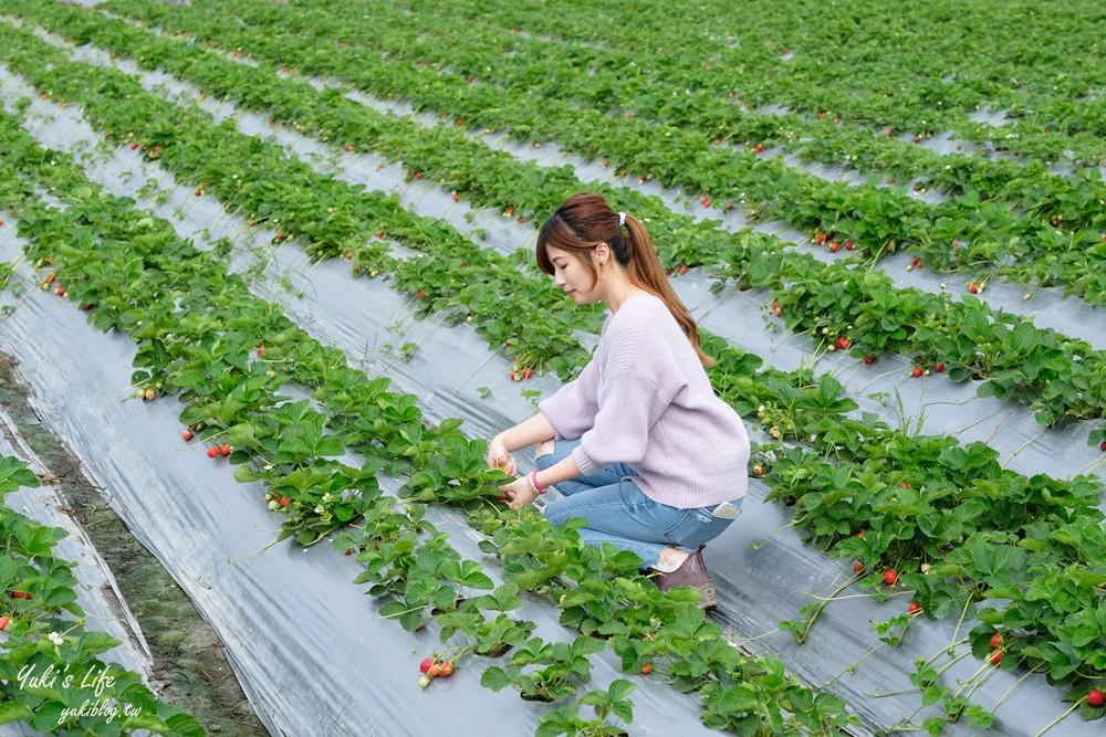南投也可以採草莓「國姓鄉阿地草莓園」場地很大自己來尋寶 - yukiblog.tw