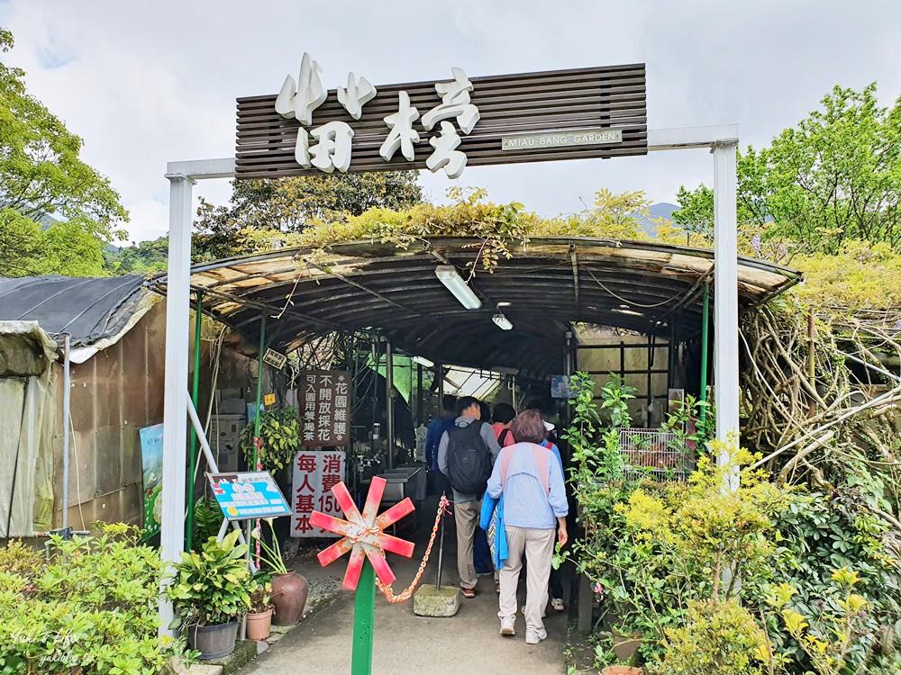 2021竹子湖海芋季》苗榜海芋園,賞海芋、吃土雞~推薦拍海芋來這一家~ - yukiblog.tw