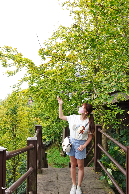 2021大崙山銀杏森林》入秋限定~黃色耀眼森林景色!品嚐特別的銀杏火鍋! - yukiblog.tw