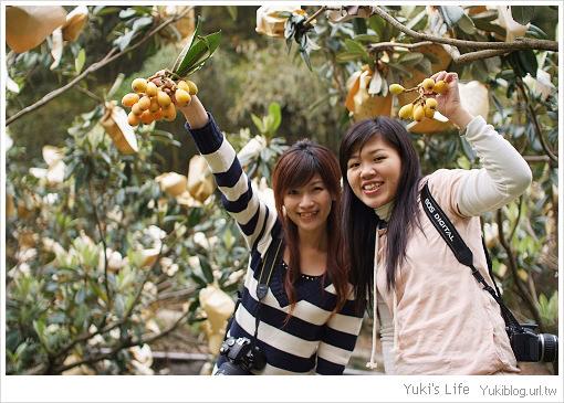 私の景點-北橫高義村採枇杷