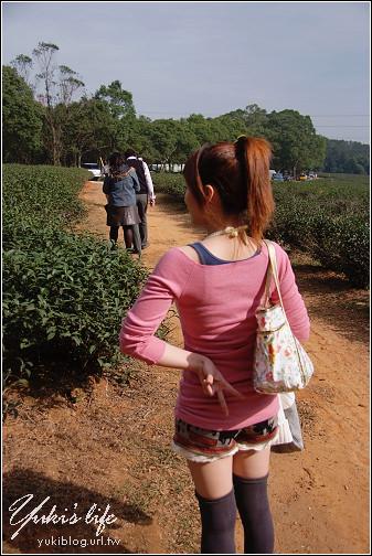 苗栗-慈濟山茶園