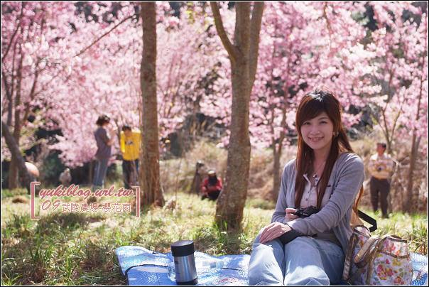 [09賞櫻]*武陵農場 II ~武陵橋•櫻樹下的邂逅 - yukiblog.tw