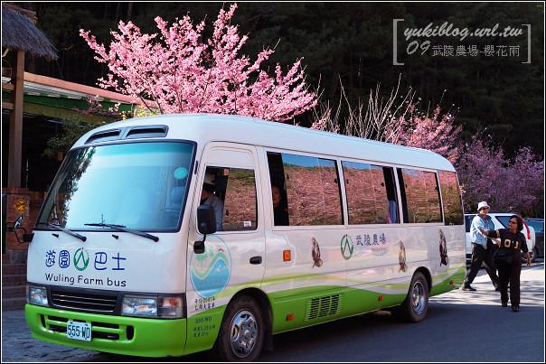 武陵農場-櫻花雨