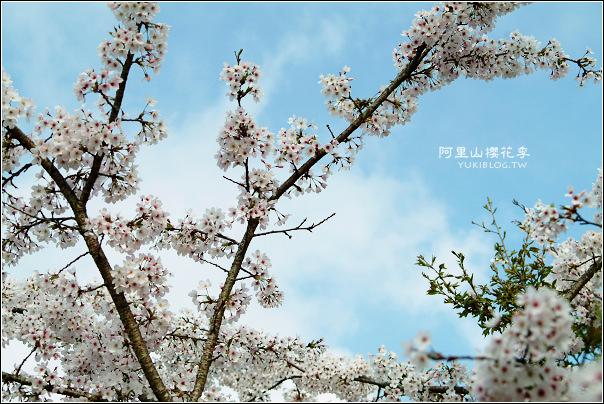 06阿里山櫻花季