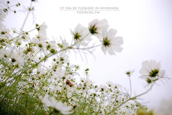 [台中-遊]*09新社花海節~如彩虹般的絢麗 (下)