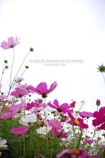 09新社花海