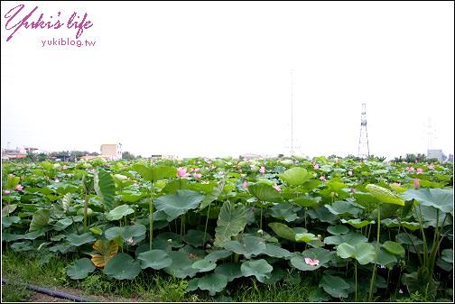 [台南-遊]*白河~蓮花一大片 - yukiblog.tw