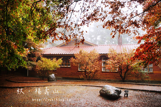 [台中遊記]*秋‧福壽山農場~松盧楓紅 (10/31楓況 ❤ 現在賞楓正是時候 ) - yukiblog.tw