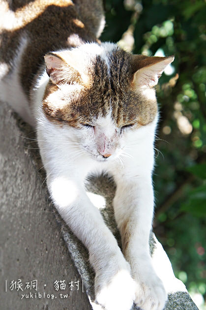 [台北遊記]*候硐(猴硐)‧貓村 ~ 可愛的小村落.每個角落都有笑咪咪的貓兒 - yukiblog.tw