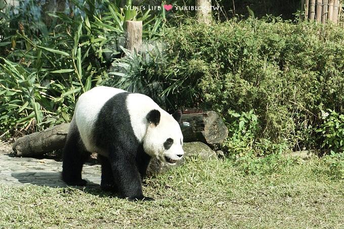 [台北木柵]*動物園半日遊初體驗 GO。2Y8M - yukiblog.tw