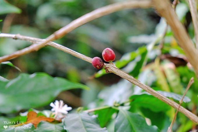 苗栗景點【上田咖啡莊園】繽紛愛心椅×樟樹桐花森林×咖啡慢生活(親子適合) - yukiblog.tw