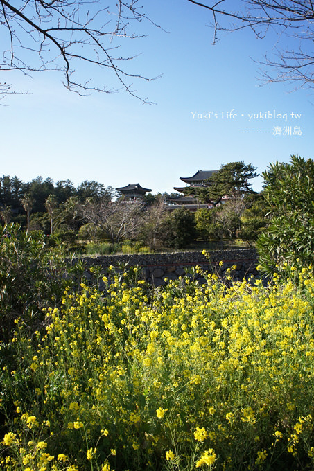 韓國濟洲島旅行【藥泉寺】濟洲最大的寺廟.天海一線真美!