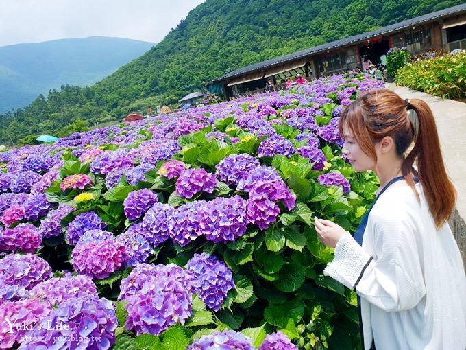 2018繡球花季推廌景點《頂湖財福繡球花園》淹沒在紫色繡球花田超浪漫!