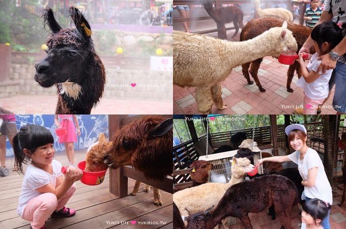 彰化景點【今夜星辰休閒農場】觸摸草泥馬好療癒、沙坑、可愛拍照場景、 親子約會好去處 - yukiblog.tw