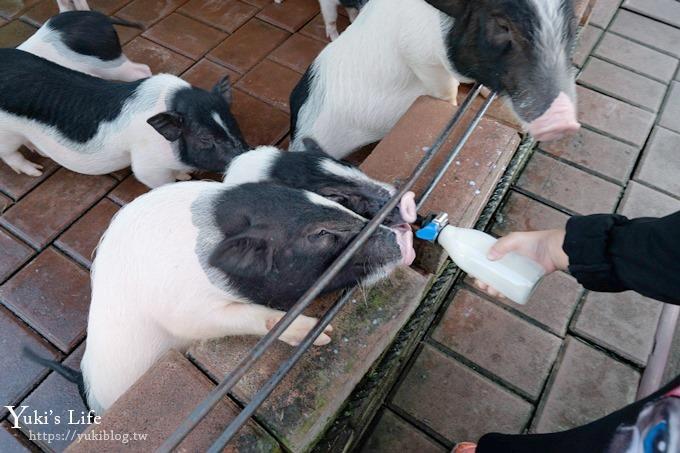 宜蘭景點【宜農牧場】30元銅板價×兒童遊戲區~餵羊餵小豬休閒農場親子必訪! - yukiblog.tw
