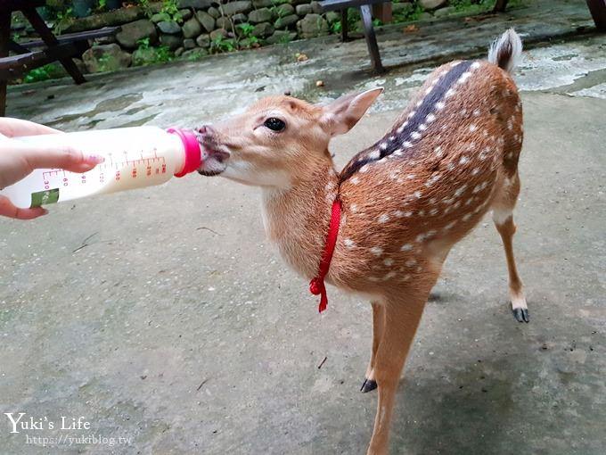 屏東親子景點【阿信巧克力農場】墾丁餵小鹿×巧克力DIY體驗生態之旅×兒童森林遊戲區 - yukiblog.tw