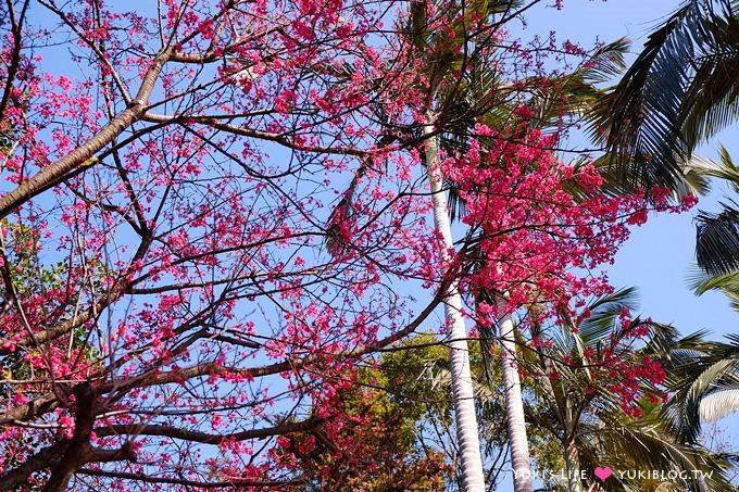 桃園虎頭山【奧爾森林學堂】貓頭鷹樹屋、超大溜滑梯、烤肉、賞櫻花景點 - yukiblog.tw