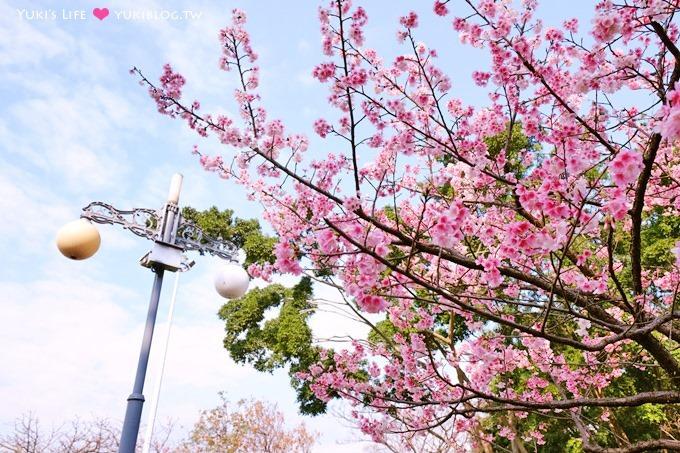樹林賞櫻親子景點【溪北公園】大貝殼溜滑梯野餐好去處(2/22花況)