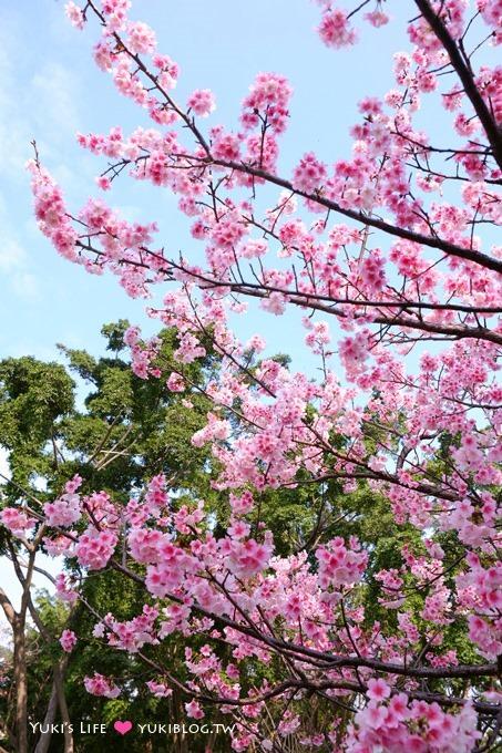 樹林賞櫻親子景點【溪北公園】大貝殼溜滑梯野餐好去處(2/22花況) - yukiblog.tw