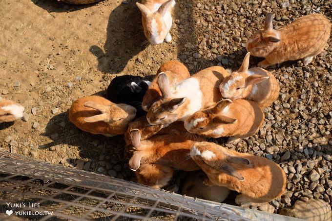 小孩超喜歡!CP值高!↬獨角仙休閒農場親子好去處×野餐×餵小牛×草泥馬超多動物 - yukiblog.tw