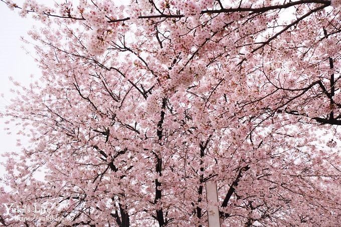 韓國賞櫻景點推廌【汝矣島櫻花節】櫻花隧道超浪漫×野餐大草皮 - yukiblog.tw