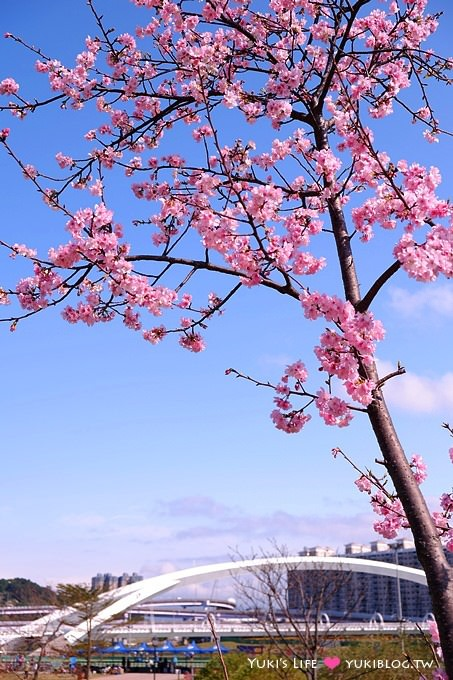 台北景點【新店陽光運動公園】河津櫻盛開~市區賞櫻、騎腳踏車 (02/02花況) - yukiblog.tw