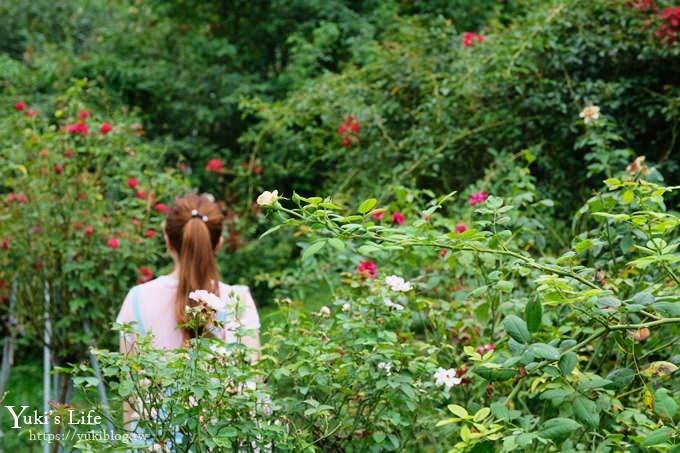 苗栗景點【雅聞七里香玫瑰森林】浪漫歐風玫瑰山谷×品嚐粉紅玫瑰冰淇淋 - yukiblog.tw