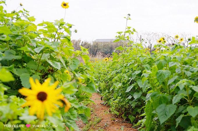 桃園觀音景點【青林農場】便宜門票、有沙坑、小火車、餵兔子的親子旅遊地點 Yukis Life by yukiblog.tw