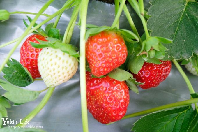 桃園大溪採草莓推薦【323溫室精緻農場】北部採草莓景點×場地超大下雨也能採 - yukiblog.tw