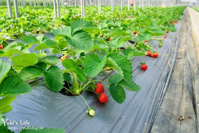 桃园大溪采草莓推荐【323温室精致农场】北部采草莓景点×场地超大下雨也能采 - yukiblog.tw