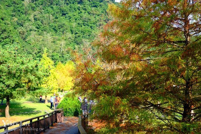 苗栗景點《南庄雲水度假森林》落羽松踏青好去處×水池花園、泡湯美食親子景點 - yukiblog.tw