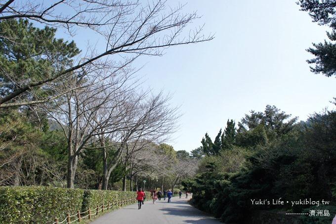 韓國濟洲島旅行【漢拏樹木園】櫻花大道盛開時期是每年的3月下旬~4月中旬 - yukiblog.tw