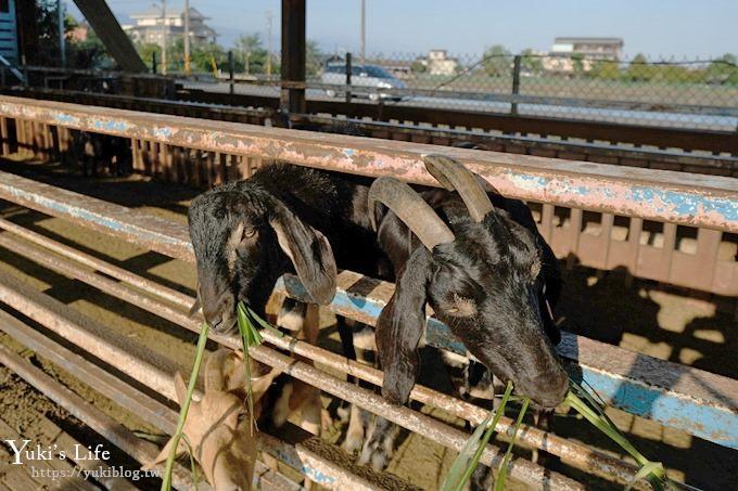 宜蘭景點【可達休閒羊場】免門票×員山小型動物園親子農場~餵羊餵兔子 - yukiblog.tw
