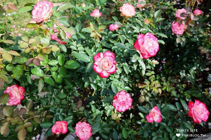 苗栗景點【雅聞香草植物工廠】免費觀光工廠玫瑰花園超夢幻×沙坑草皮孩子最愛 - yukiblog.tw