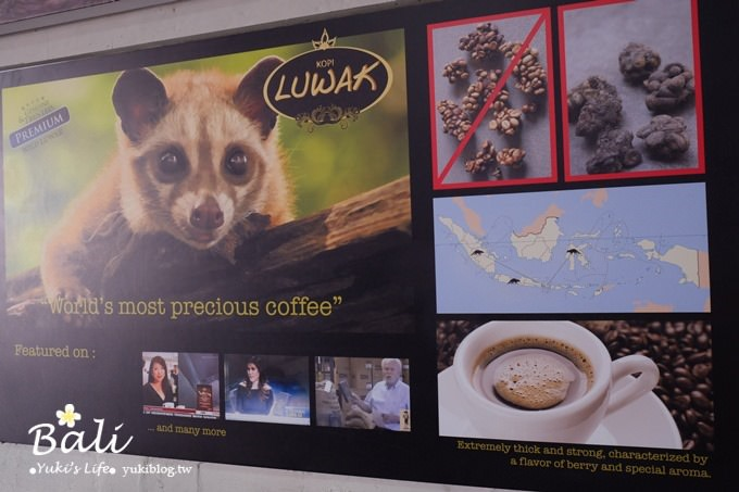 峇里島景點【DOMBA coffee 峇里島小綿羊黃金咖啡】傳說中的麝香貓咖啡 - yukiblog.tw